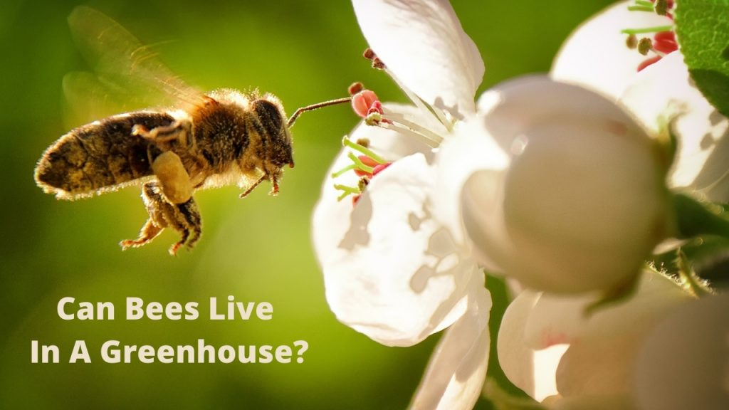 Can Bees Live In A Greenhouse
