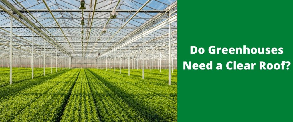 Do Greenhouses Need a Clear Roof